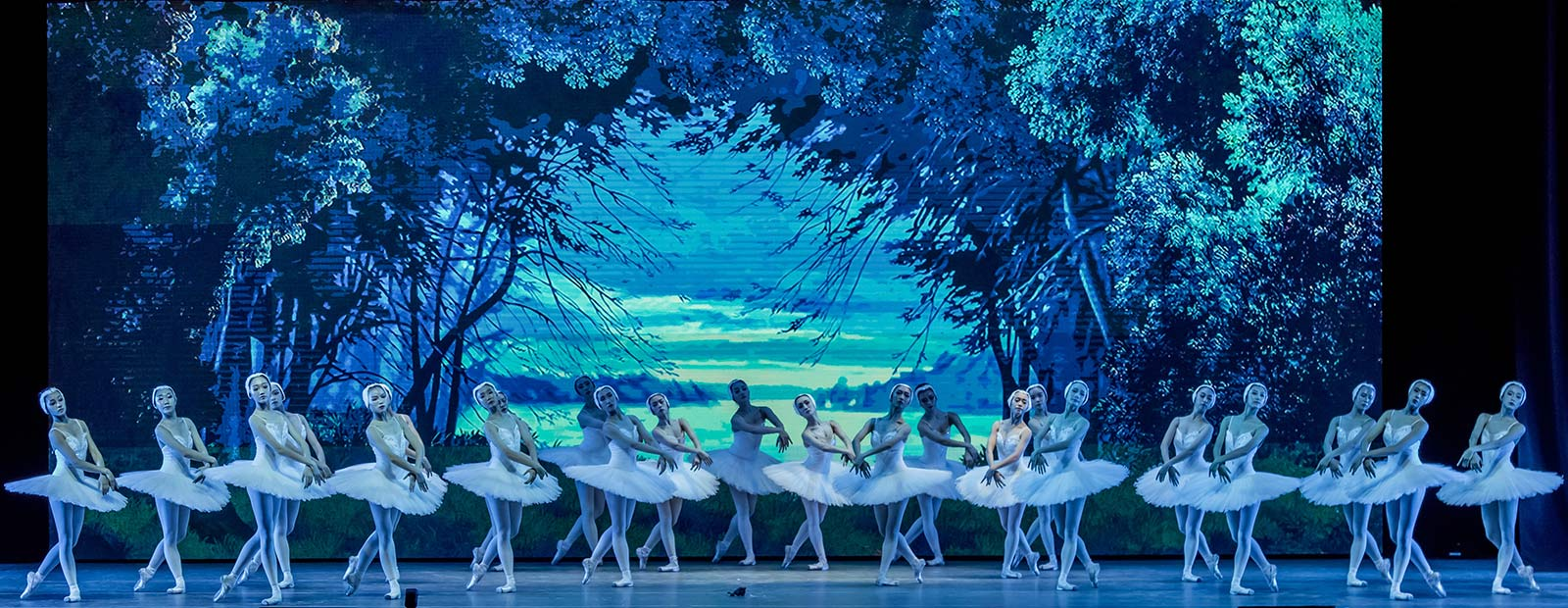 Beauty of the swan lake presented by the Tianjin Ballet